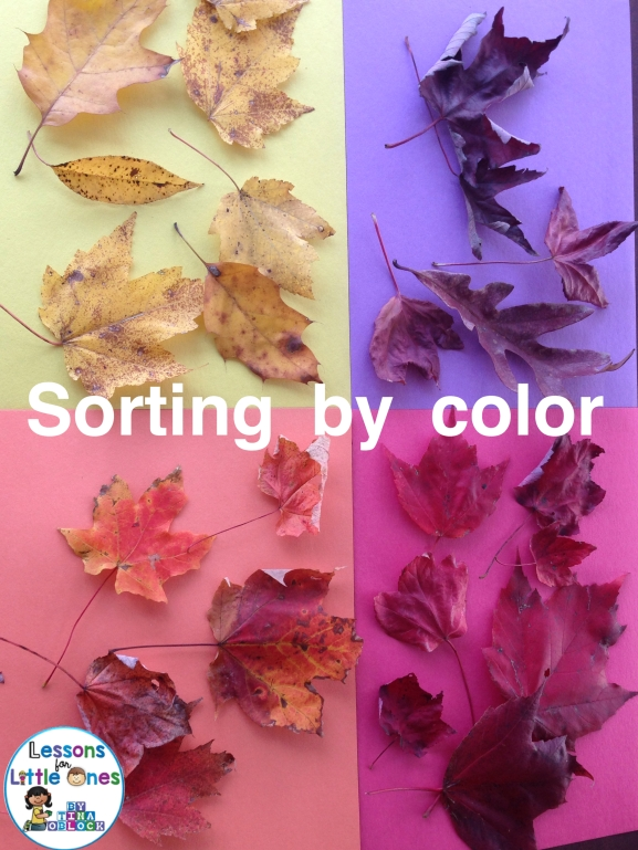 sorting fall leaves by color