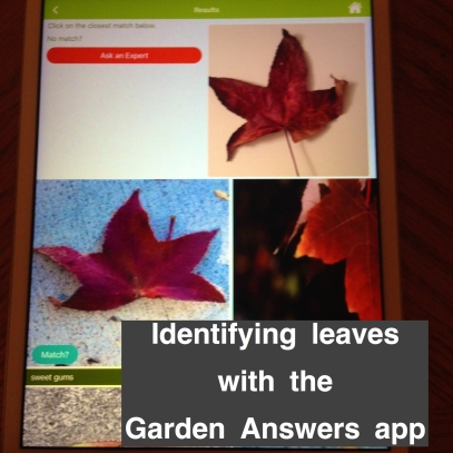 identifying fall leaves