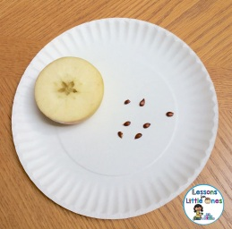 apple and seeds